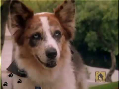 Photo of dog Eddie McDowd from TV show